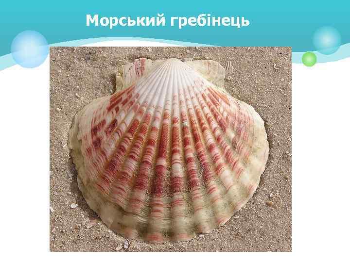 Морський гребінець