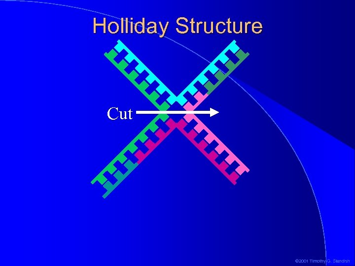 Holliday Structure Cut © 2001 Timothy G. Standish