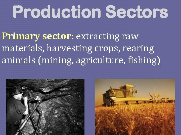 Production Sectors Primary sector: extracting raw materials, harvesting crops, rearing animals (mining, agriculture, fishing)