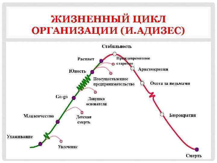 ЖИЗНЕННЫЙ ЦИКЛ ОРГАНИЗАЦИИ (И. АДИЗЕС)