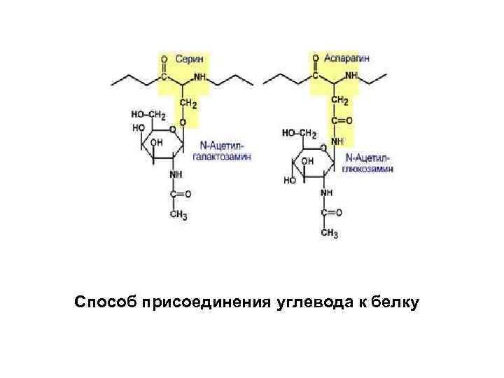 Способ присоединения углевода к белку
