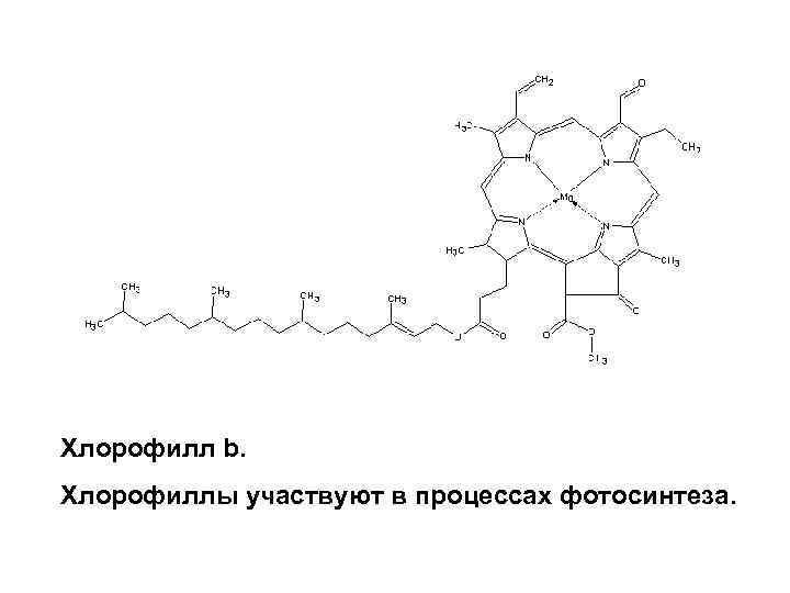 Хлорофилл b. Хлорофиллы участвуют в процессах фотосинтеза.