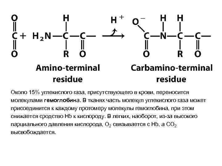 Около 15% углекислого газа, присутствующего в крови, переносится молекулами гемоглобина. В тканях часть молекул