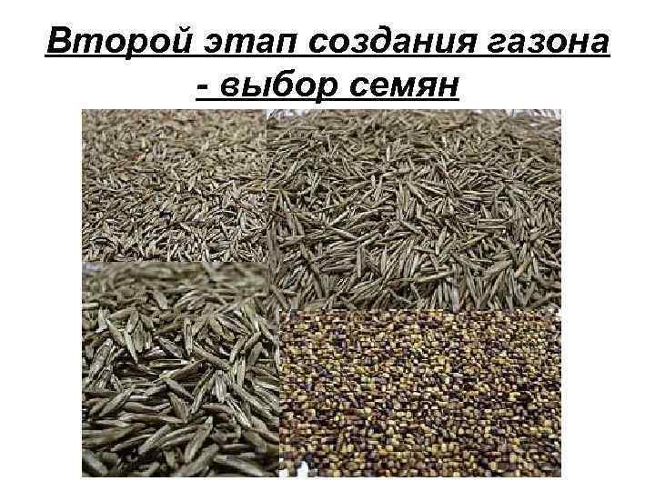 Второй этап создания газона - выбор семян