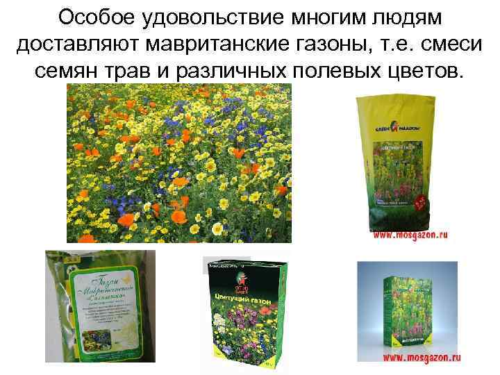 Особое удовольствие многим людям доставляют мавританские газоны, т. е. смеси семян трав и различных