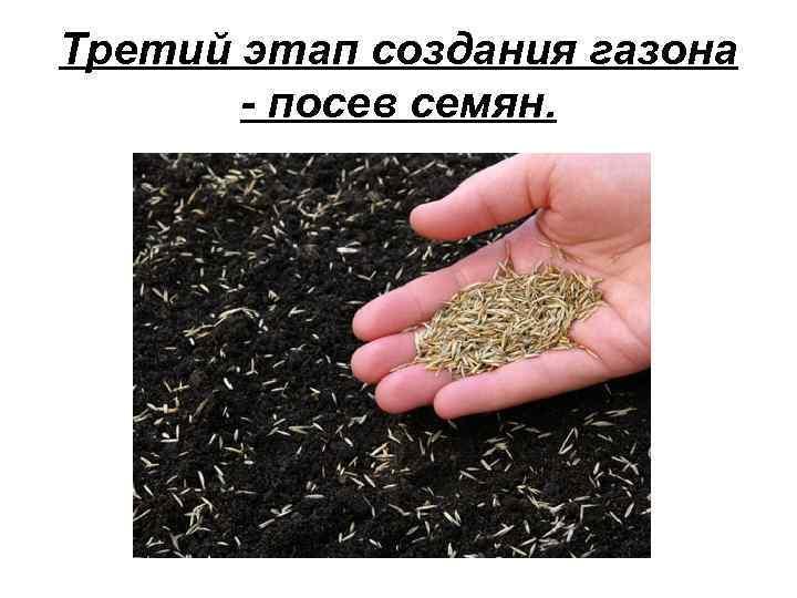 Третий этап создания газона - посев семян.