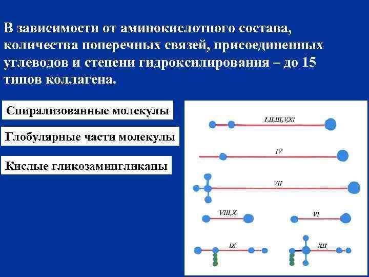 В зависимости от аминокислотного состава, количества поперечных связей, присоединенных углеводов и степени гидроксилирования –