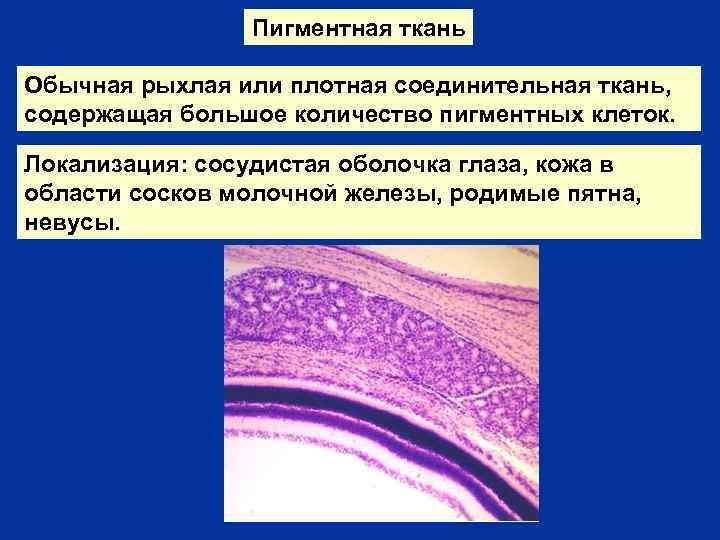 Пигментная ткань Обычная рыхлая или плотная соединительная ткань, содержащая большое количество пигментных клеток. Локализация: