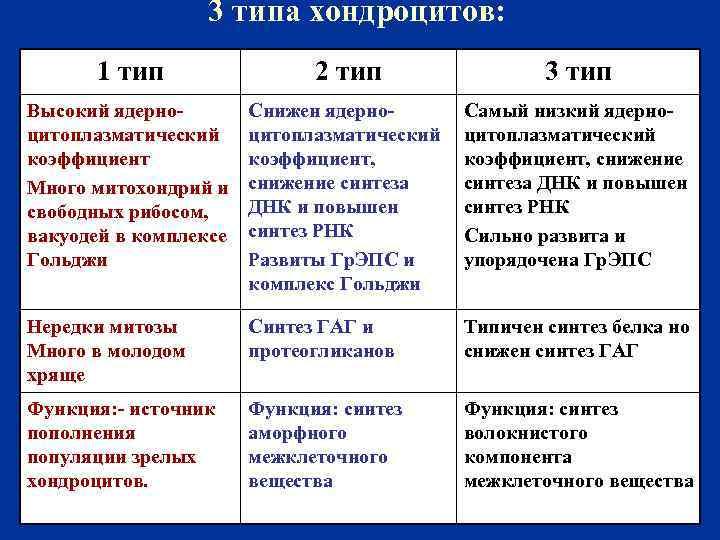 3 типа хондроцитов: 1 тип 2 тип 3 тип Высокий ядерноцитоплазматический коэффициент Много митохондрий