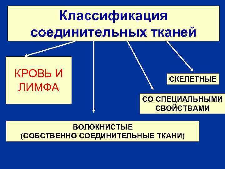 Классификация соединительных тканей КРОВЬ И ЛИМФА СКЕЛЕТНЫЕ СО СПЕЦИАЛЬНЫМИ СВОЙСТВАМИ ВОЛОКНИСТЫЕ (СОБСТВЕННО СОЕДИНИТЕЛЬНЫЕ ТКАНИ)