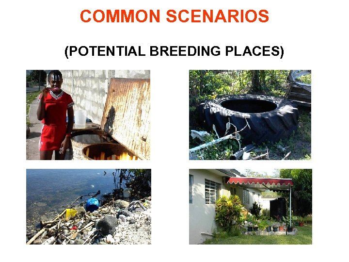 COMMON SCENARIOS (POTENTIAL BREEDING PLACES)