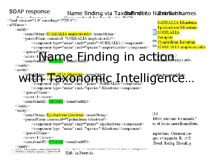 SOAP response Raw Image Name finding via Taxon. Finder Name. Bank Submit to Extract