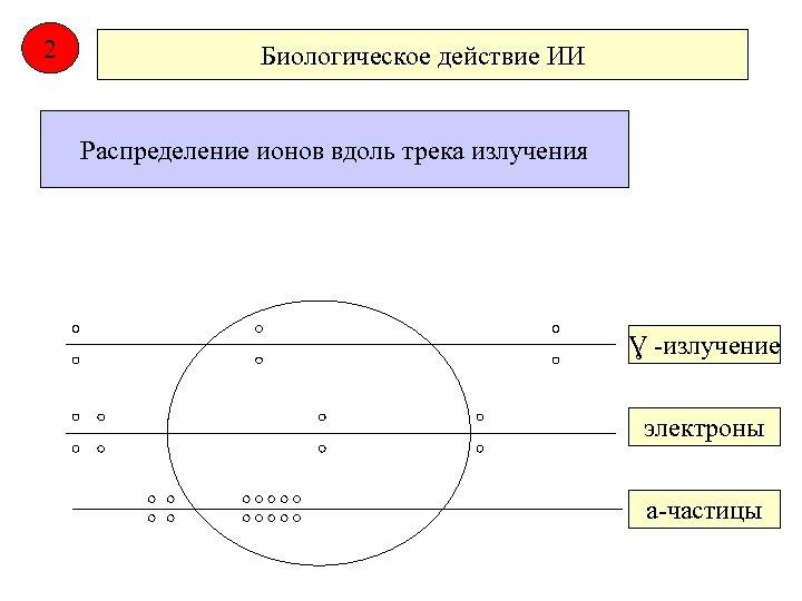 2 Биологическое действие ИИ Распределение ионов вдоль трека излучения Ɣ -излучение электроны а-частицы