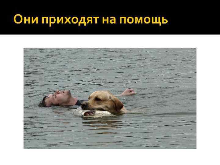 Собаки – спасатели