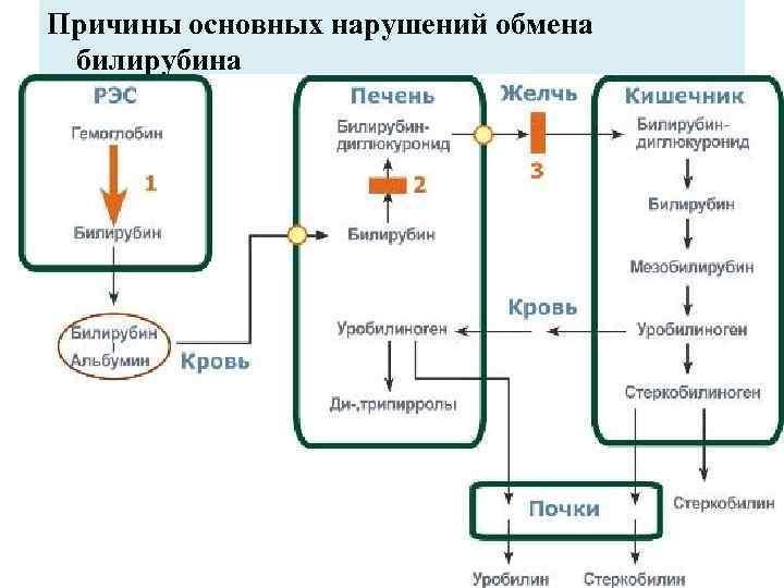 Причины основных нарушений обмена билирубина