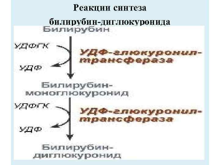 Реакции синтеза билирубин-диглюкуронида
