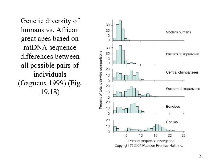 Genetic diversity of humans vs. African great apes based on mt. DNA sequence differences