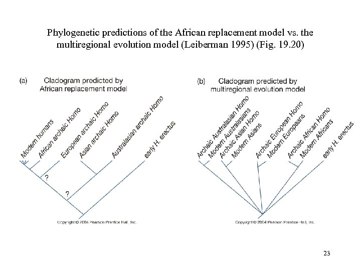 Phylogenetic predictions of the African replacement model vs. the multiregional evolution model (Leiberman 1995)