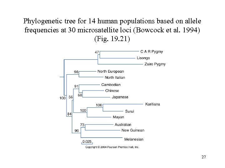 Phylogenetic tree for 14 human populations based on allele frequencies at 30 microsatellite loci