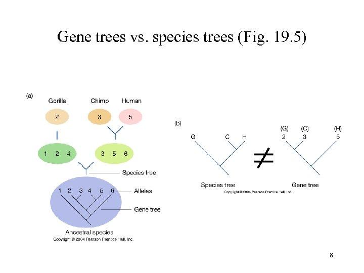 Gene trees vs. species trees (Fig. 19. 5) 8