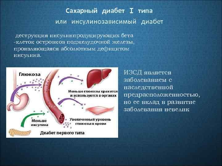 Сахарный диабет I типа или инсулинозависимый диабет деструкция инсулинпродуцирующих бета -клеток островков поджелудочной железы,