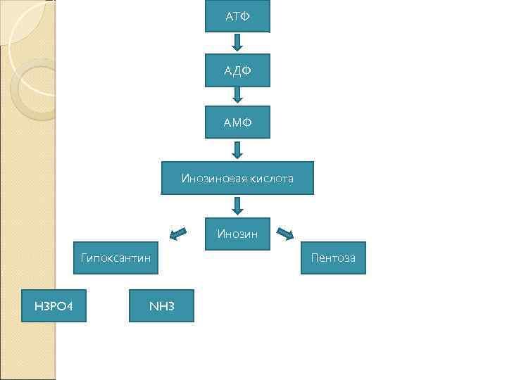 АТФ АДФ АМФ Инозиновая кислота Инозин Гипоксантин H 3 PO 4 NH 3 Пентоза