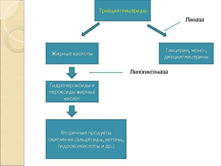 Триацилглицериды Липаза Жирные кислоты Глицерин, моно-, диацилглицерины Липогиксеназа Гидропероксиды и пероксиды жирных кислот Вторичные