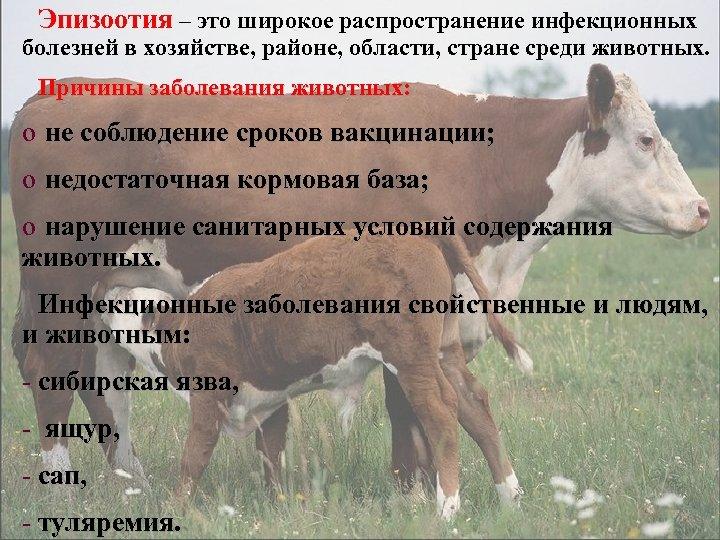 Эпизоотия – это широкое распространение инфекционных болезней в хозяйстве, районе, области, стране среди животных.