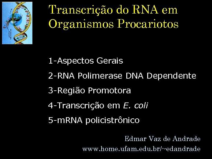 Transcrição do RNA em Organismos Procariotos 1 -Aspectos Gerais 2 -RNA Polimerase DNA Dependente