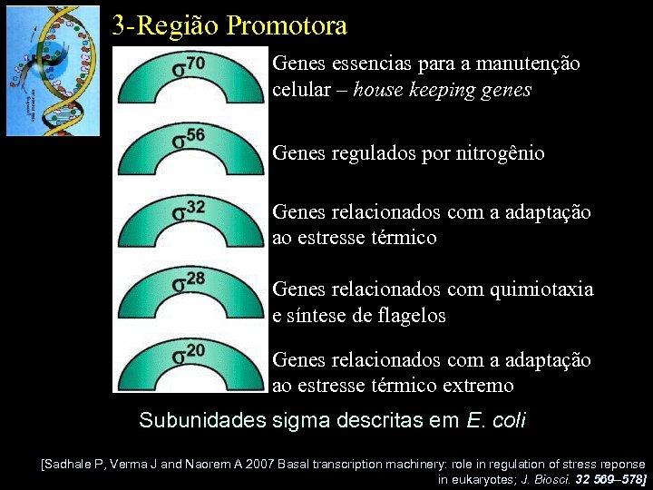 3 -Região Promotora Genes essencias para a manutenção celular – house keeping genes Genes