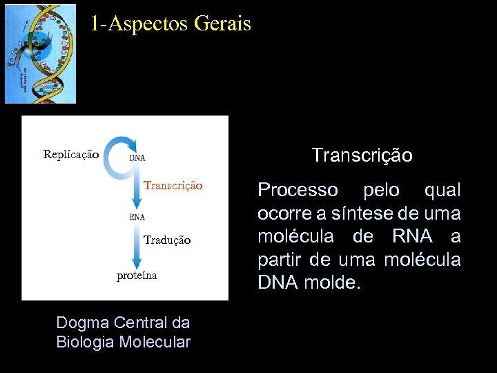 1 -Aspectos Gerais Transcrição Replicação Transcrição Tradução proteína Dogma Central da Biologia Molecular Processo