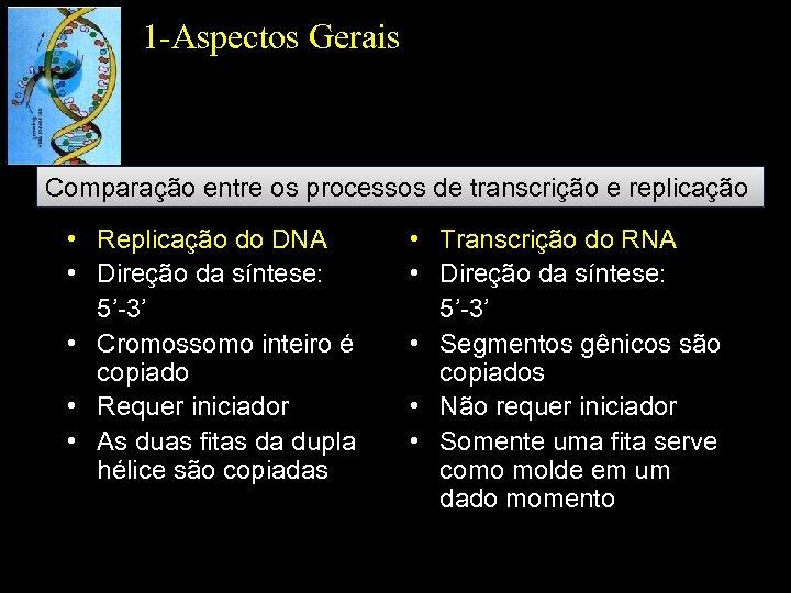 1 -Aspectos Gerais Comparação entre os processos de transcrição e replicação • Replicação do