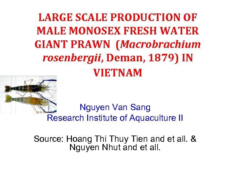 LARGE SCALE PRODUCTION OF MALE MONOSEX FRESH WATER GIANT PRAWN (Macrobrachium rosenbergii, Deman, 1879)