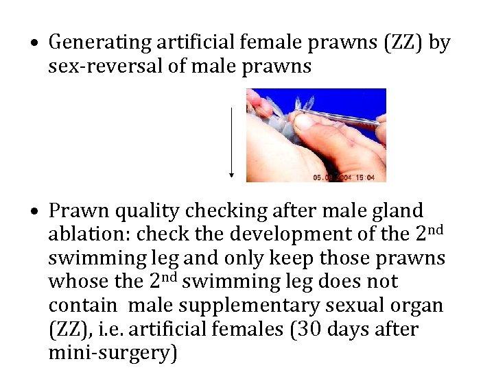 • Generating artificial female prawns (ZZ) by sex-reversal of male prawns • Prawn