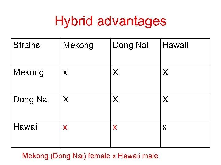 Hybrid advantages Strains Mekong Dong Nai Hawaii Mekong x X X Dong Nai X