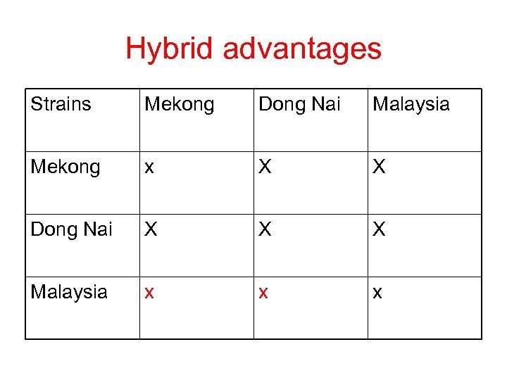 Hybrid advantages Strains Mekong Dong Nai Malaysia Mekong x X X Dong Nai X