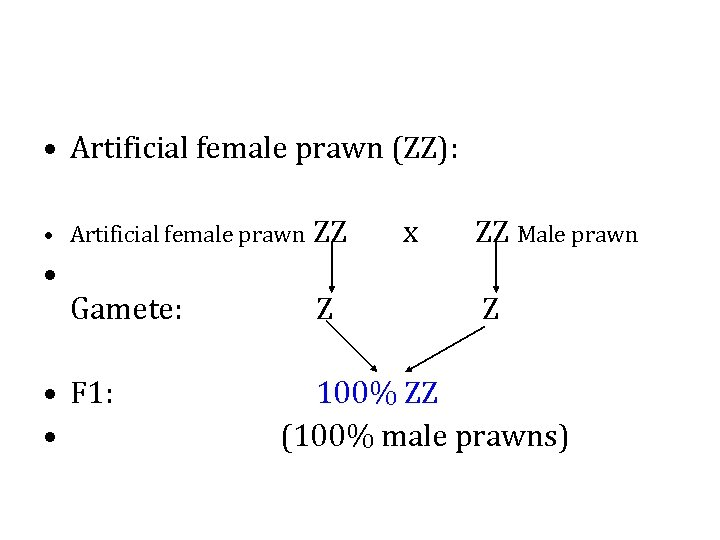 • Artificial female prawn (ZZ): • Artificial female prawn ZZ • Gamete: •