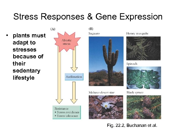 Stress Responses & Gene Expression • plants must adapt to stresses because of their
