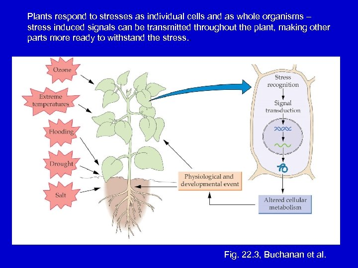 Plants respond to stresses as individual cells and as whole organisms – stress induced