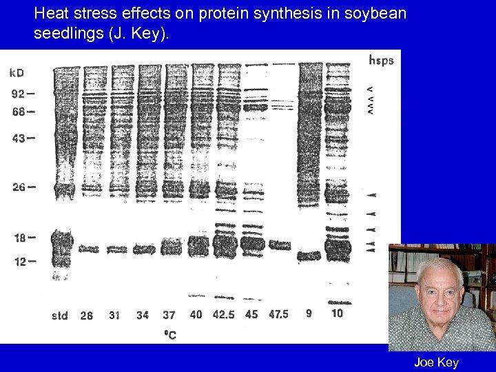 Heat stress effects on protein synthesis in soybean seedlings (J. Key). Joe Key