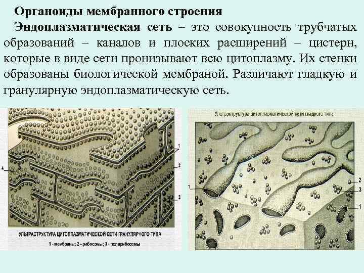 Органоиды мембранного строения Эндоплазматическая сеть – это совокупность трубчатых образований – каналов и плоских