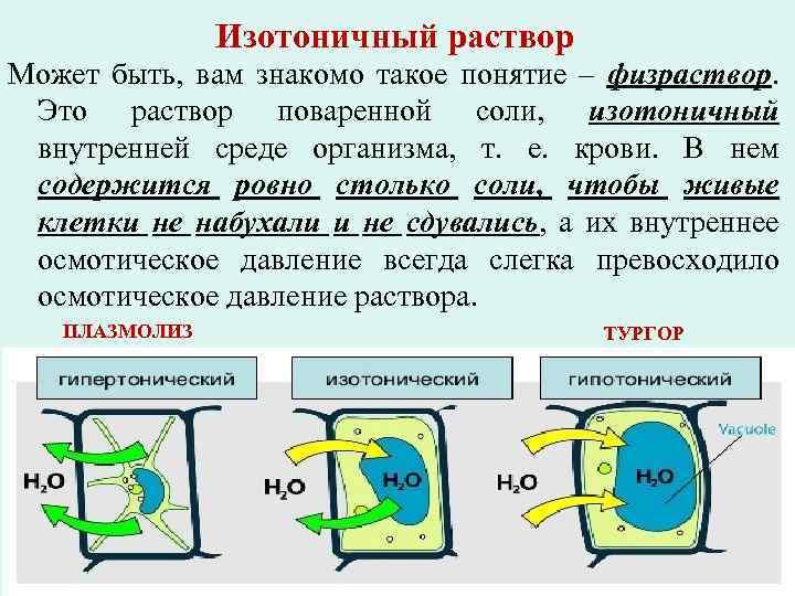 Изотоничный раствор Может быть, вам знакомо такое понятие – физраствор. Это раствор поваренной соли,