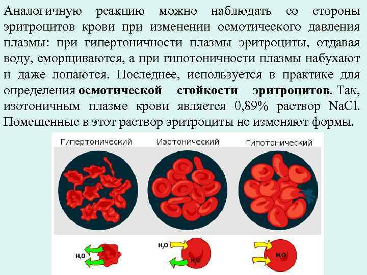 Аналогичную реакцию можно наблюдать со стороны эритроцитов крови при изменении осмотического давления плазмы: при