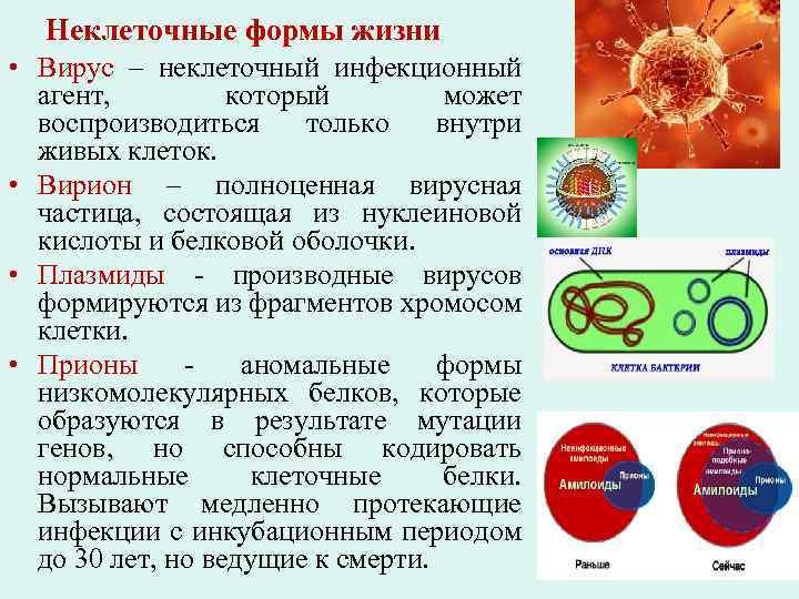 Неклеточные формы жизни • Вирус – неклеточный инфекционный агент, который может воспроизводиться только внутри