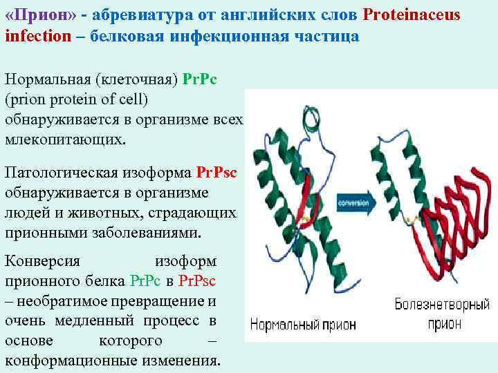 «Прион» - абревиатура от английских слов Proteinaceus infection – белковая инфекционная частица Нормальная