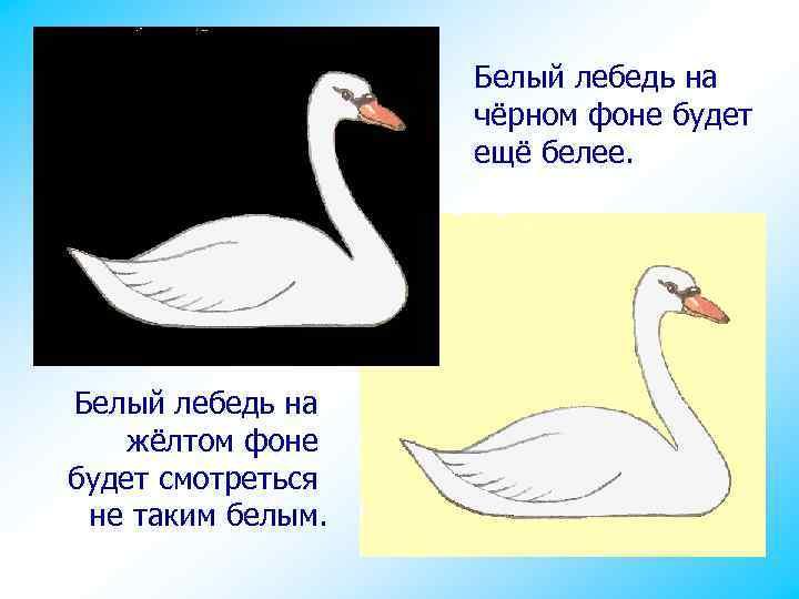Белый лебедь на чёрном фоне будет ещё белее. Белый лебедь на жёлтом фоне будет