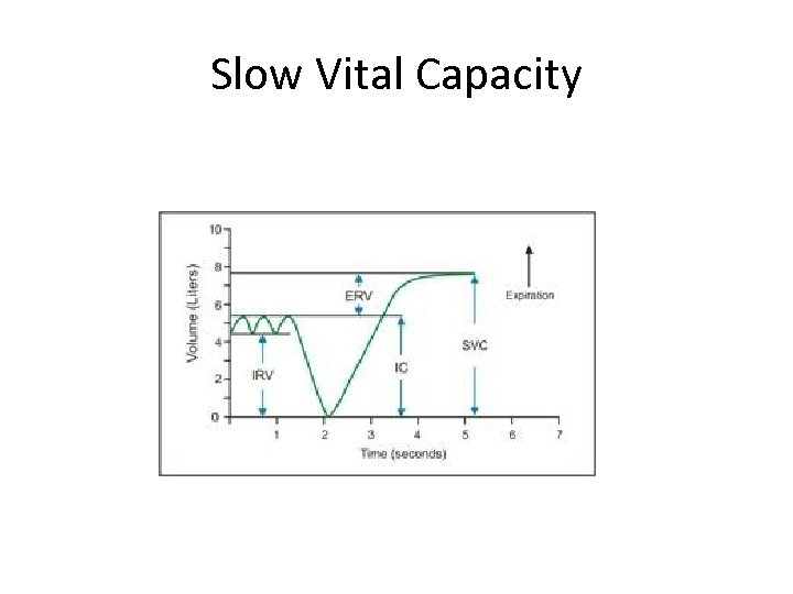 Slow Vital Capacity