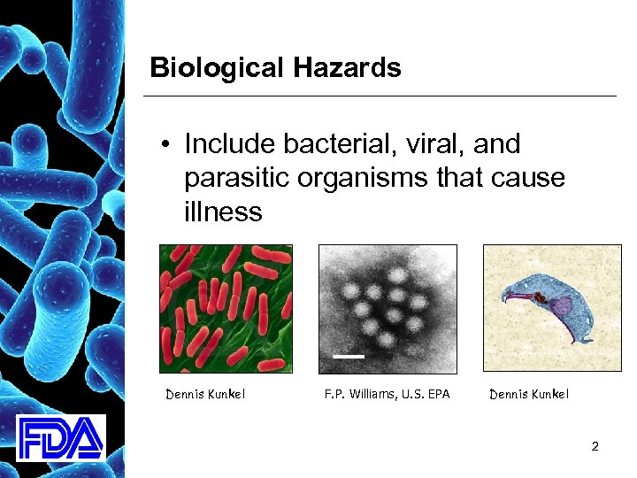 Biological Hazards • Include bacterial, viral, and parasitic organisms that cause illness Dennis Kunkel
