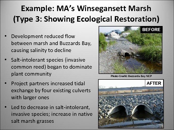 Example: MA's Winsegansett Marsh (Type 3: Showing Ecological Restoration) BEFORE • Development reduced flow