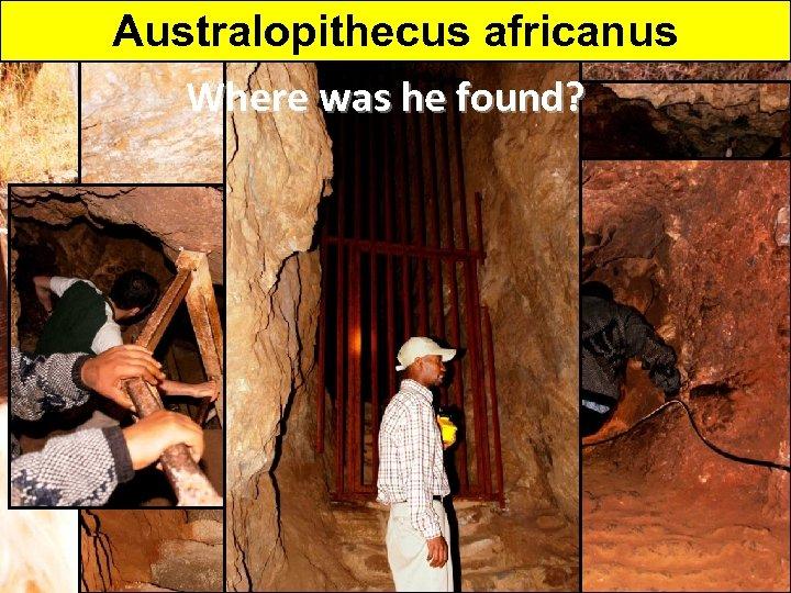 Australopithecus africanus Where was he found?